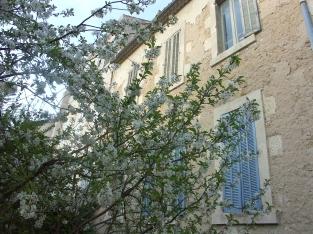 Printemps Salon de Provence