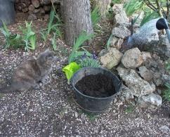 Jardinage dormancePetitChatGrain