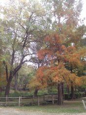 Parc de la Torse