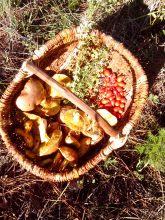 cueillette Dormance Petit Chat Grain