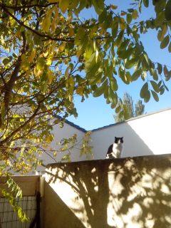 le chat de la Capelane