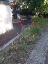Plantation sauvage dans Aix en Provence
