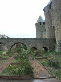Carcassonne Dormance Petit Chat Grain