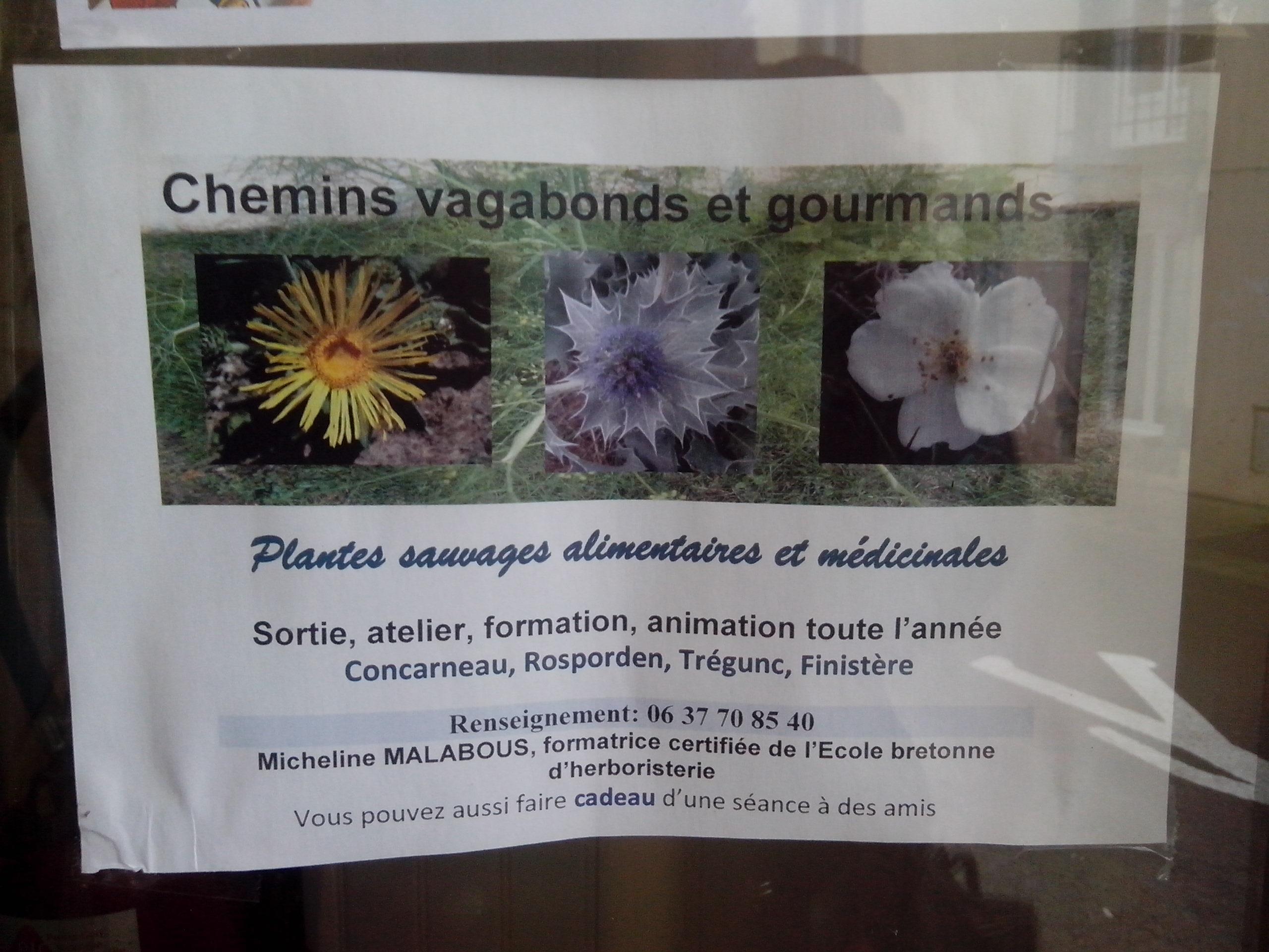 Plantes sauvages Finistère