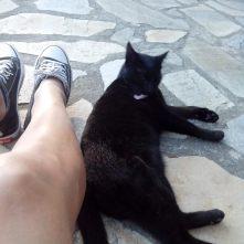 autre chat breton