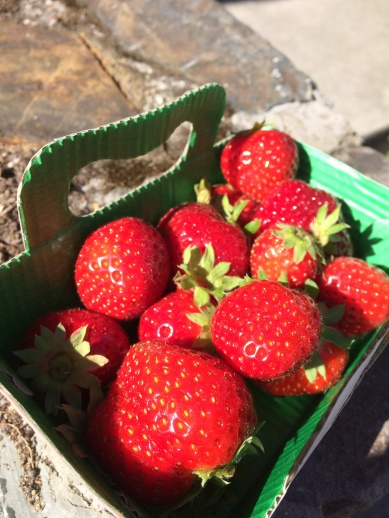 fraise bretonne