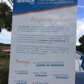 Eco-pâturage Dinan