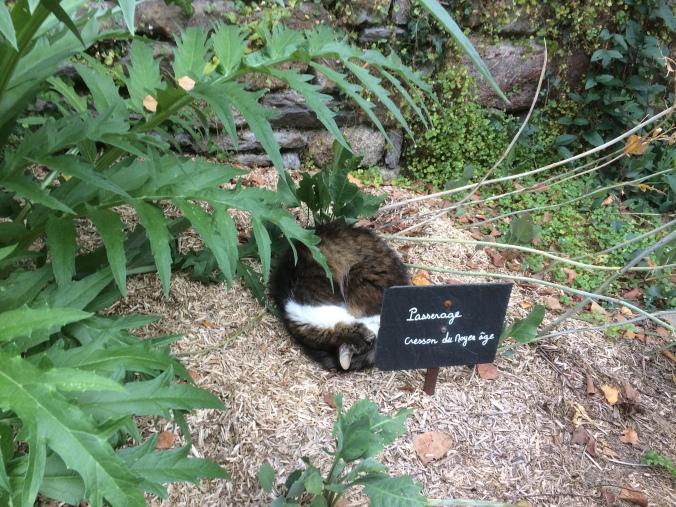 Dans un parterre de Léhon Dormance Petit Chat grain