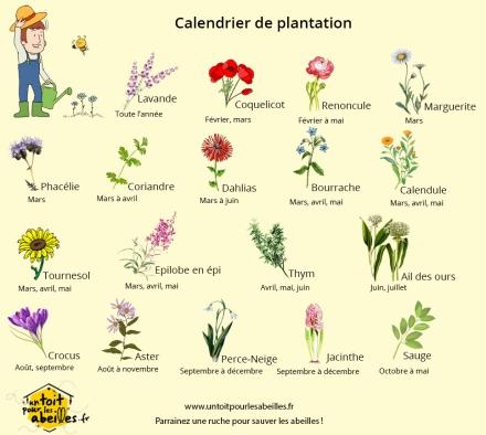 Calendrier_de_plantation_des_fleurs